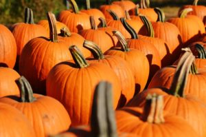 Lions Club pumpkin patch opens Oct. 10  Family Fest planned for Oct. 23