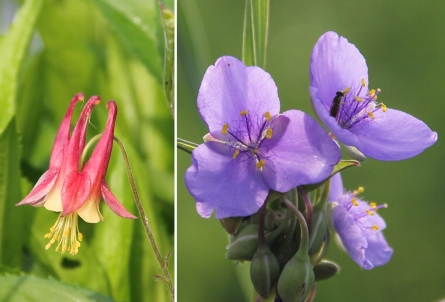 Presale orders begin today for District's 10th annual native plant sale on May 12 & 13